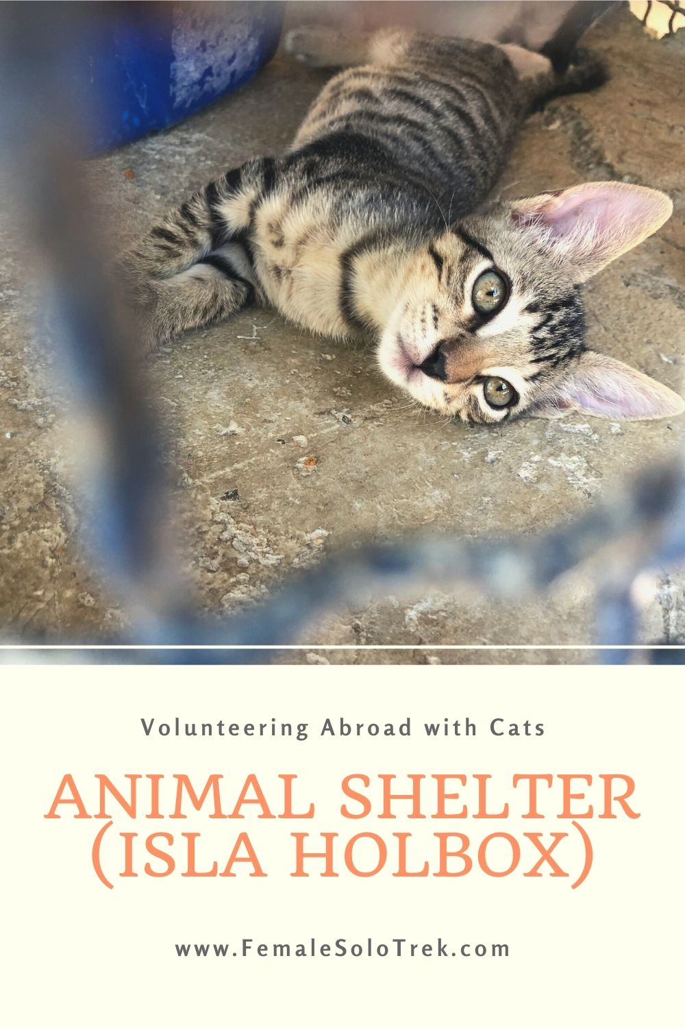 Volunteering Abroad with cats is a wonderful activity on a vacation.