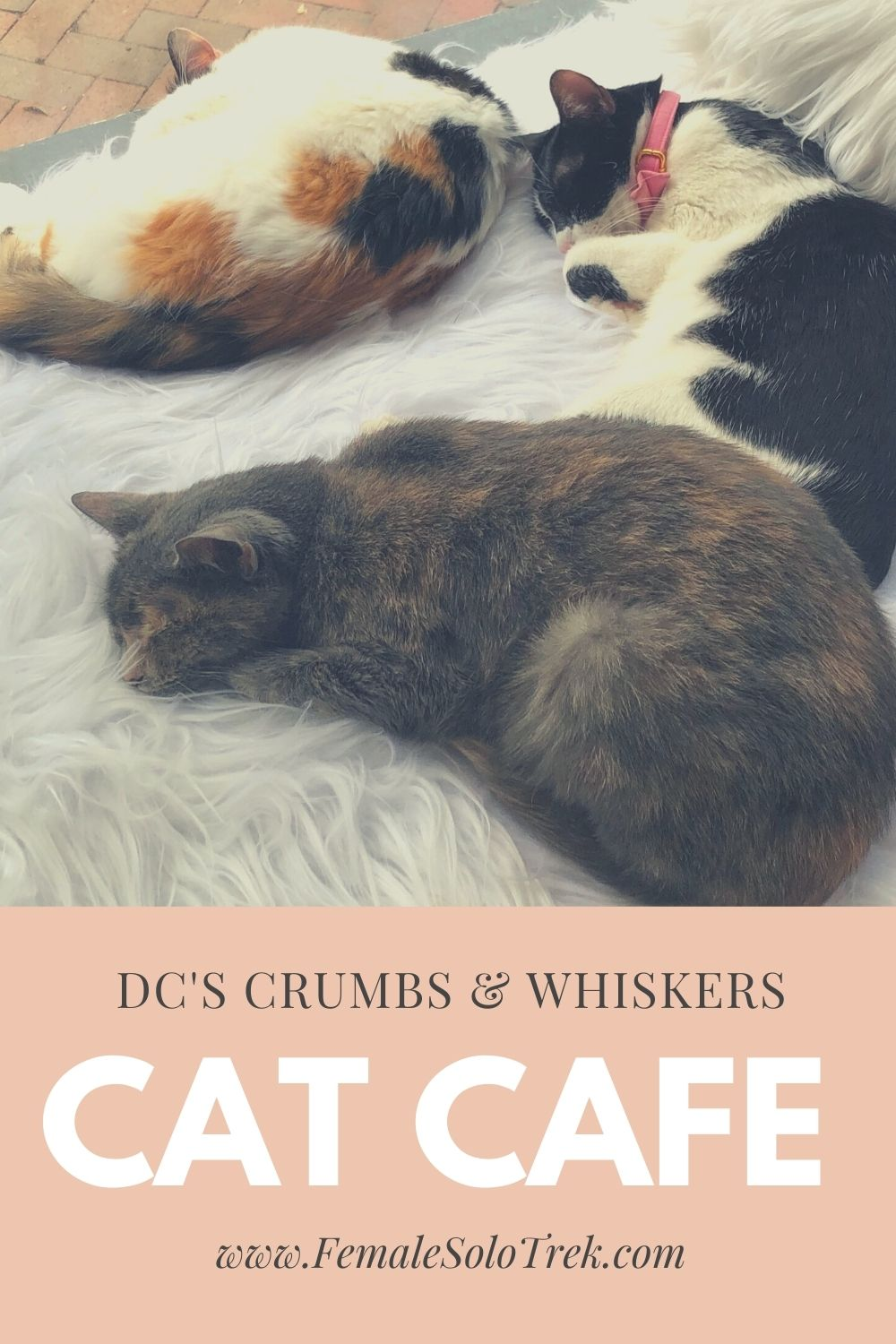Crumbs & Whiskers is DC's first cat cafe.