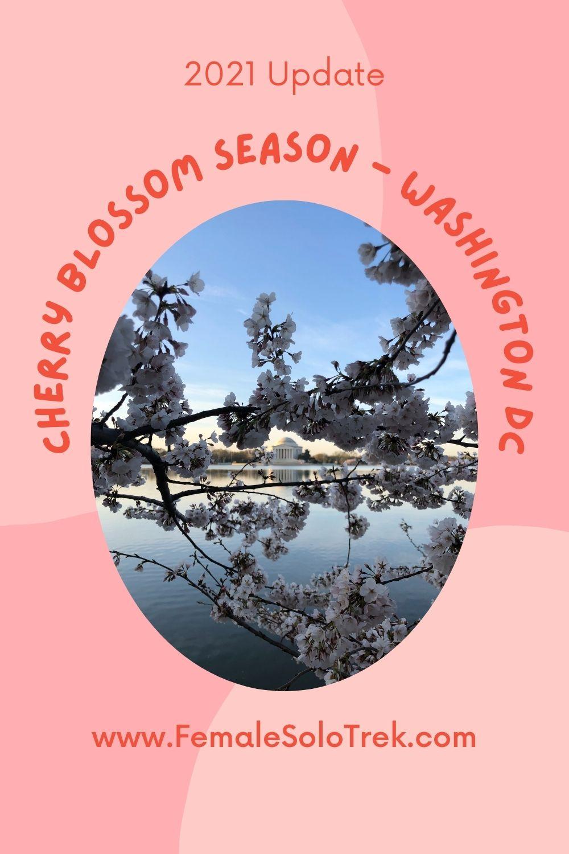 2021 Update on National Cherry Blossom Festival