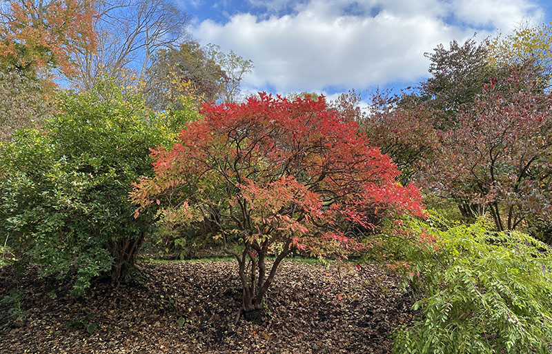 Fall foilage on display at Winterthur is colorful.