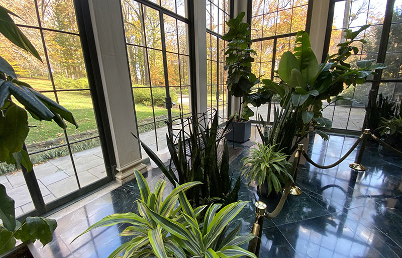 The house tour begins in the Winterthur conservatory.