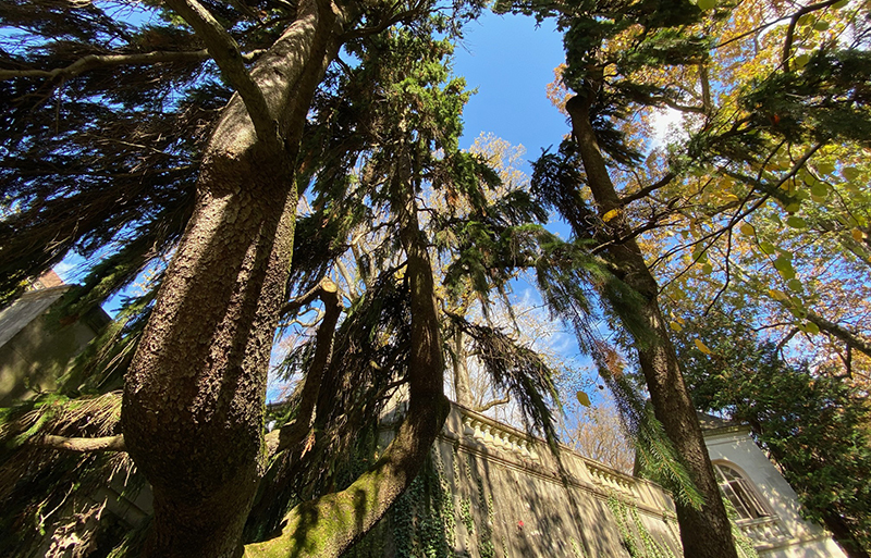 There are ancient trees growing at Winterthur gardens.