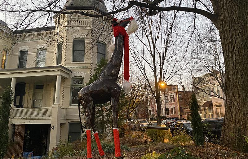 Christmas in Washington DC is a giraffe in a Santa's hat.