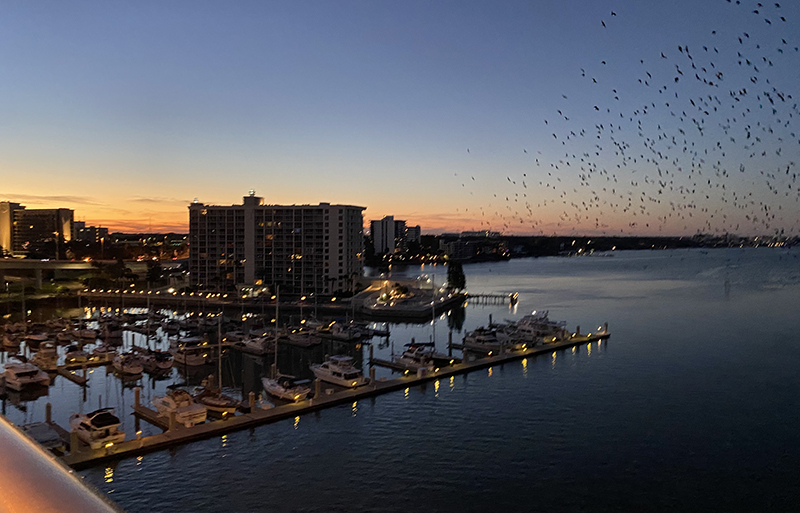 Black bird ballet_Clearwater
