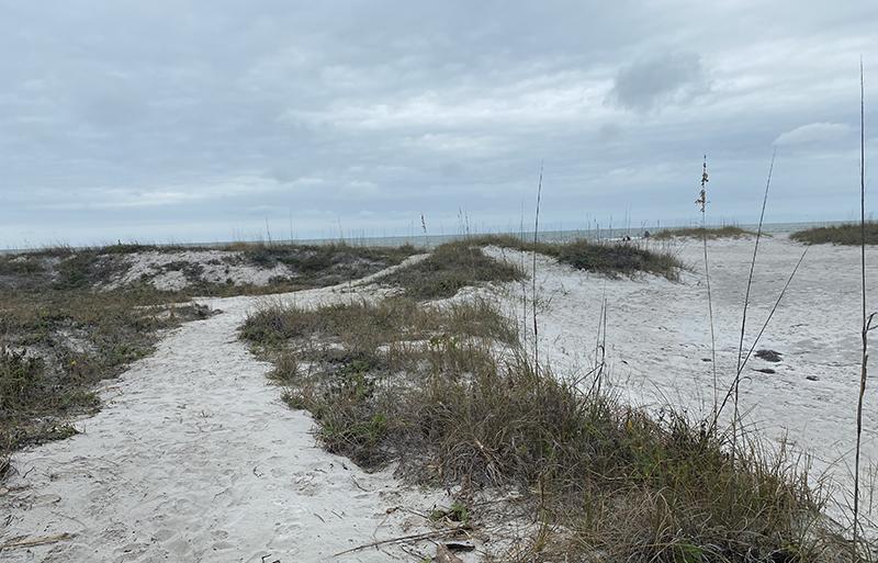 Free things to do in Clearwater should include walking in North Beach.