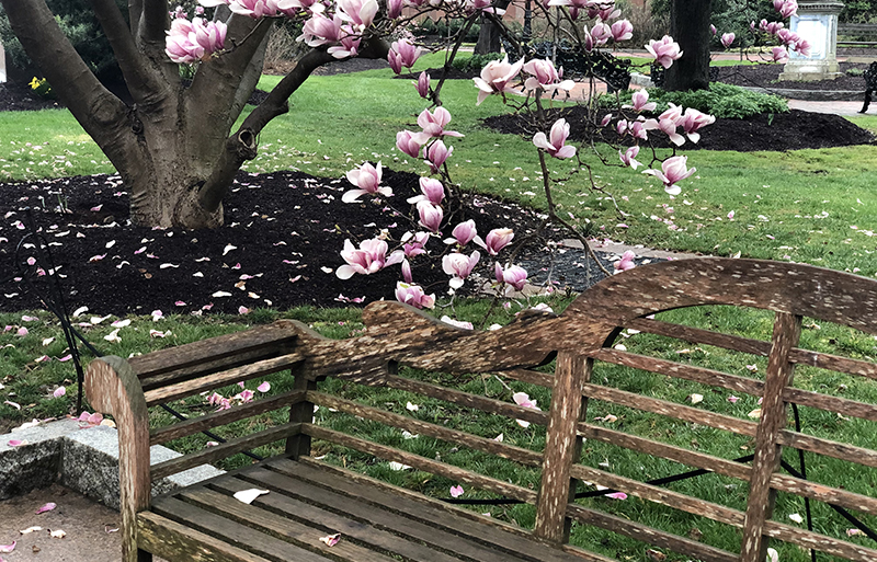 Benches are available at Enid Haupt Garden.